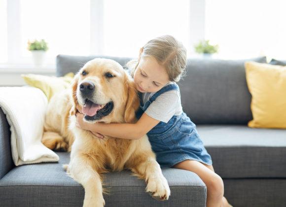 Seguro Mascotas