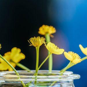 La primavera y sus efectos en nuestra salud